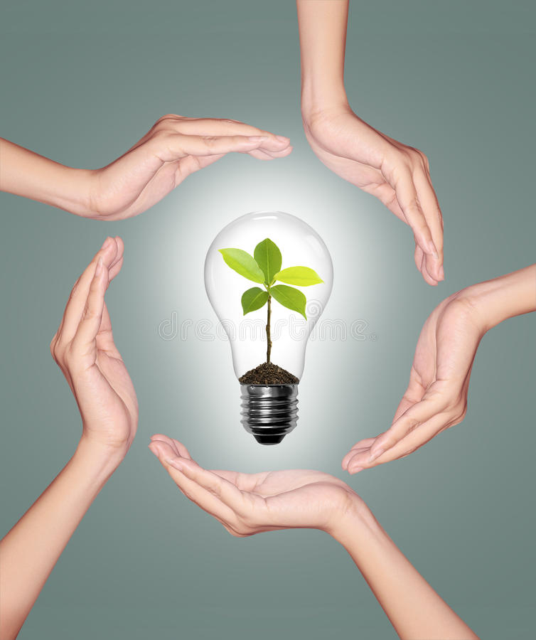 Bulb light in woman hand. Light bulb with sprout inside on green background stock images