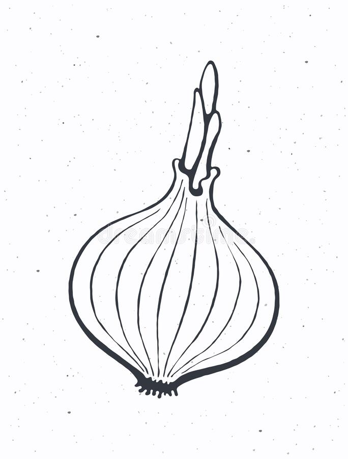 Coloring Book For Children, White Onion Royalty Free Cliparts, Vectors, And  Stock Illustration. Image 97202225.