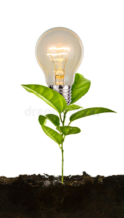 Bulb plant growing from soil. On white background royalty free stock photography
