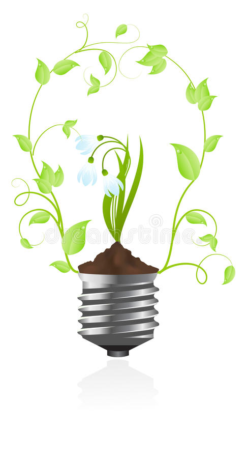 Download Bulb With Plant Of Snowdrop Stock Vector - Image: 12527393