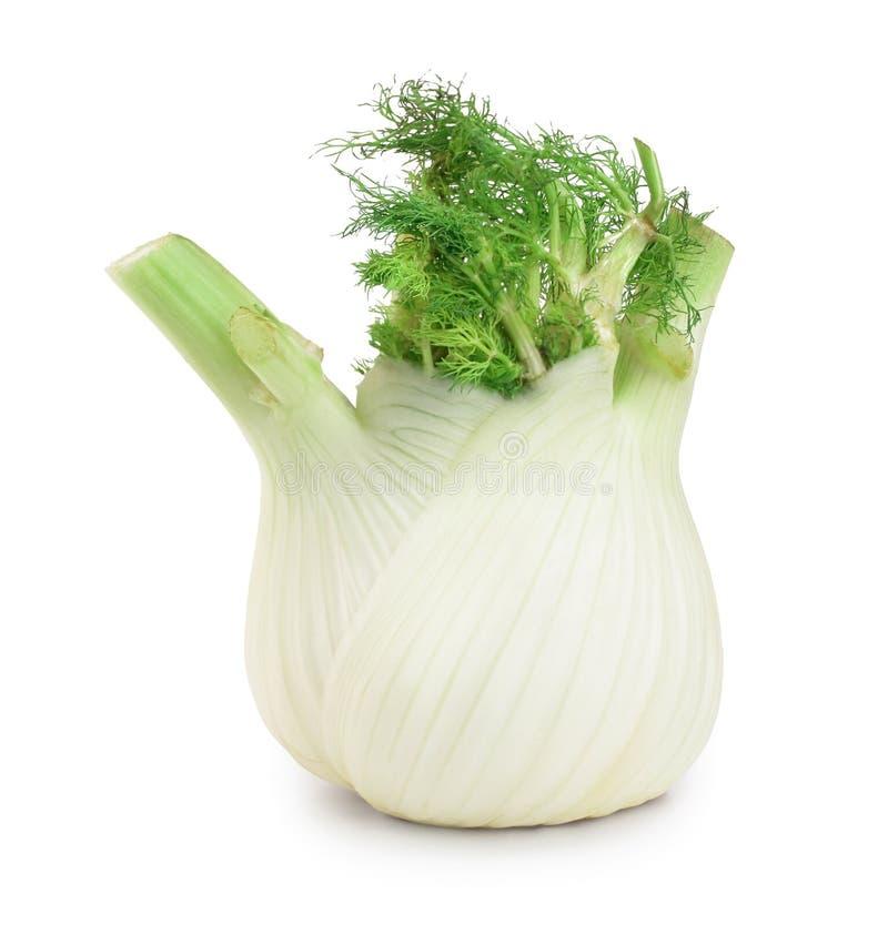 Bulbo da erva-doce ?nico bulbo fresco da erva-doce com as folhas no fundo branco foto de stock