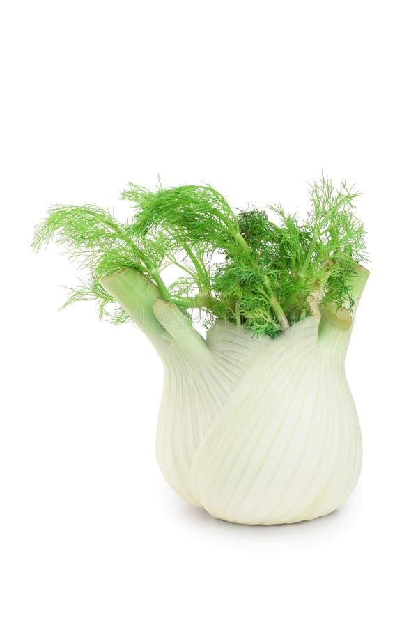 Bulbo da erva-doce ?nico bulbo fresco da erva-doce com as folhas no fundo branco imagens de stock royalty free