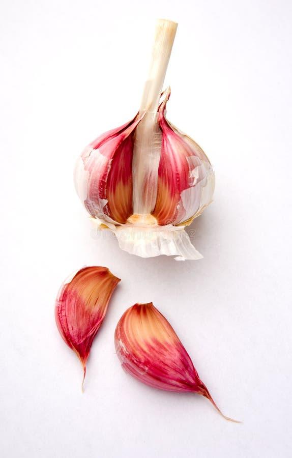 Bulbo do alho branco foto de stock