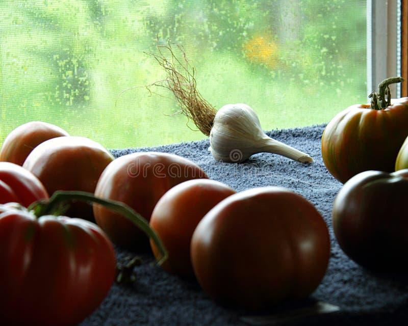 Bulbo solitario del ajo entre los tomates de la herencia imagenes de archivo