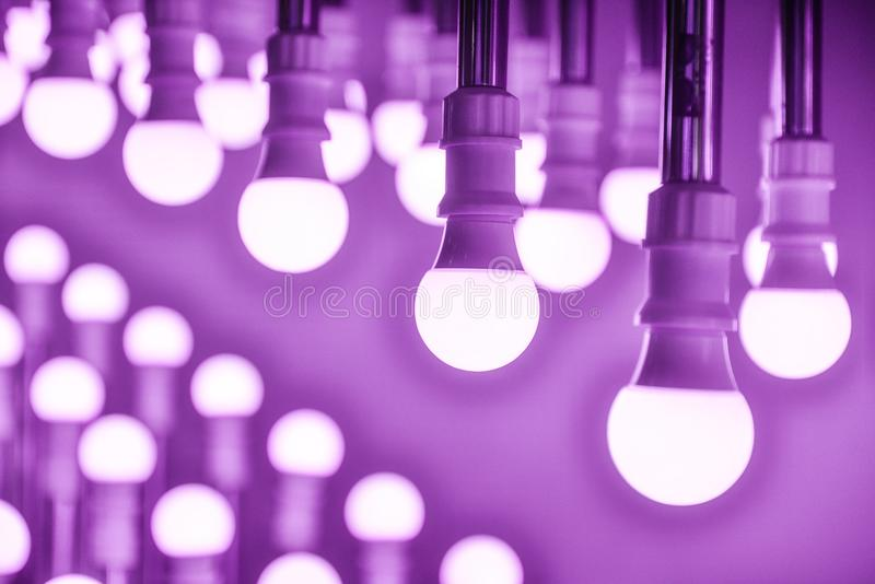 Bulbos de lâmpada conduzidos roxos imagens de stock