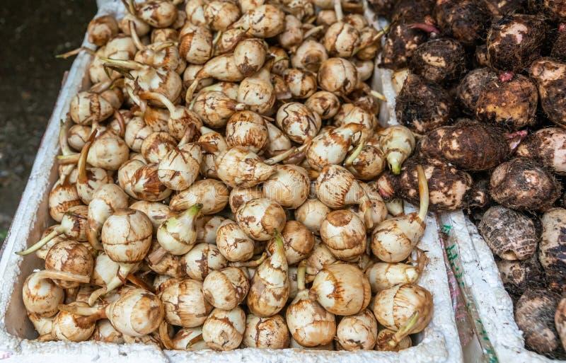 Bulbos de la planta en Tai Po Market, Hong Kong China imagen de archivo libre de regalías