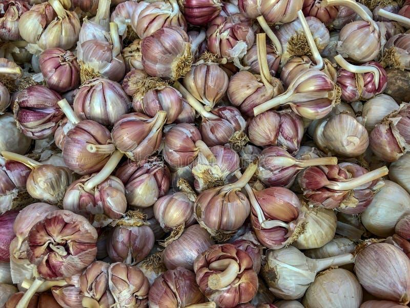 Bulbos del ajo en venta en un mercado del souk en Agadir, Marruecos fotos de archivo