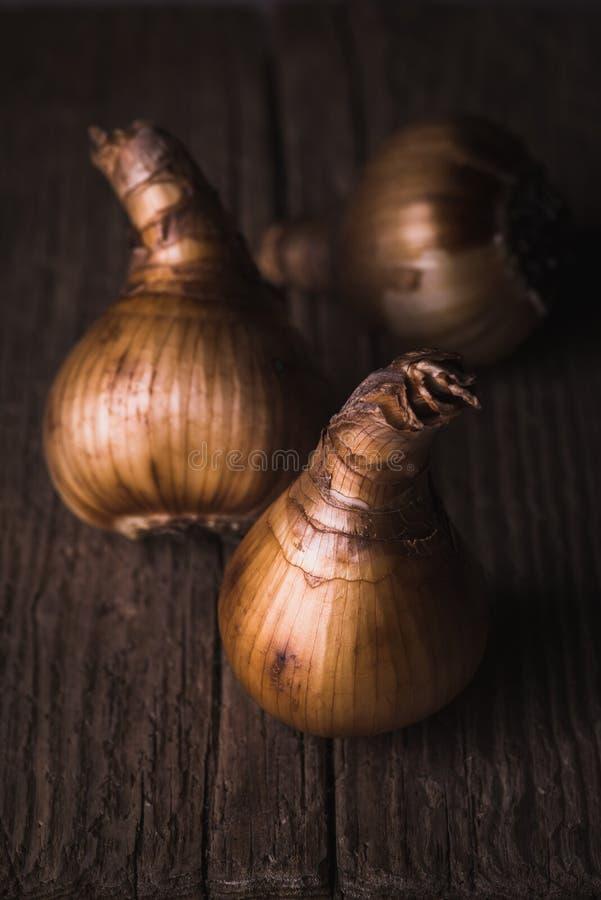 Bulbos del narciso en fondo de madera imagen de archivo