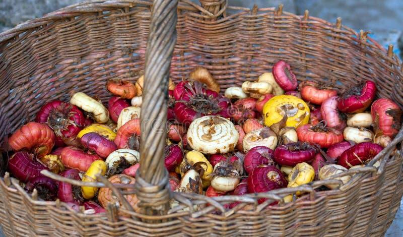 Bulbos multicolores del gladiolo en cesta fotos de archivo libres de regalías