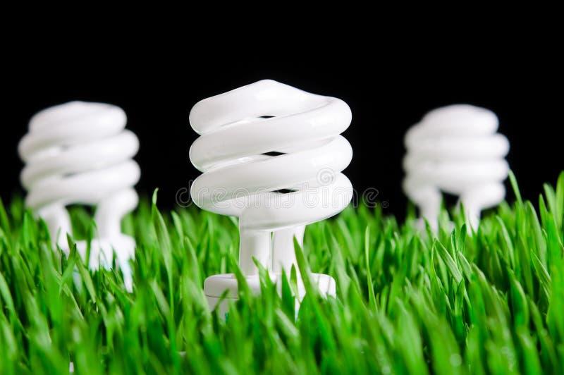 Bulbos verdes da energia - conceito ambiental imagens de stock royalty free
