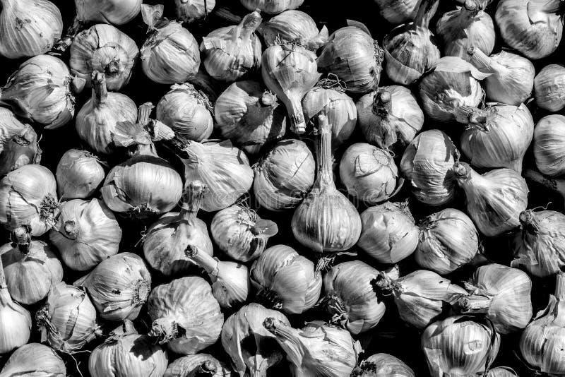 Bulbs of garlic, black and white. royalty free stock photos