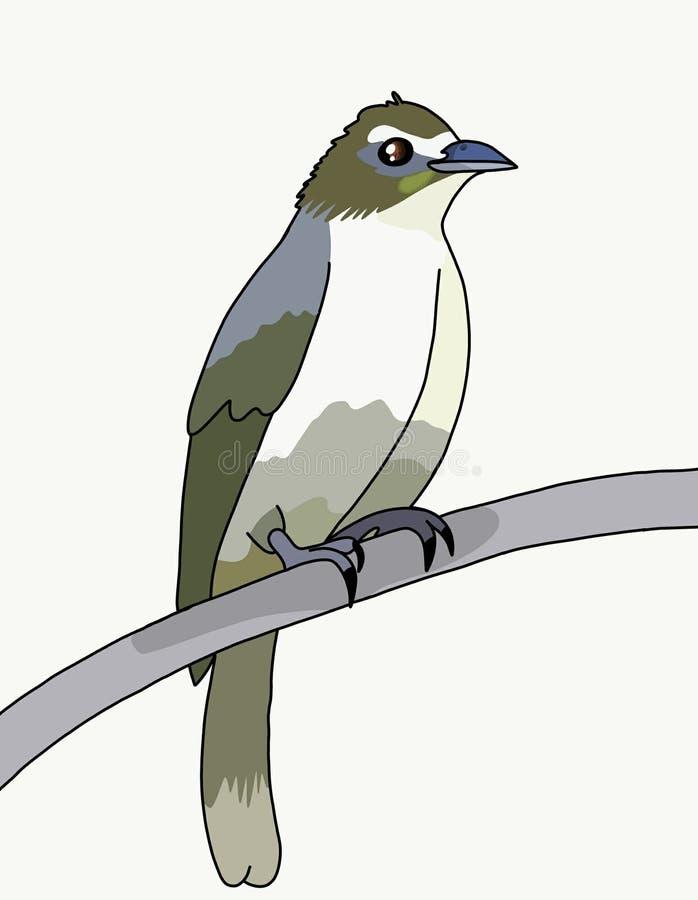 Bulbul птицы бесплатная иллюстрация