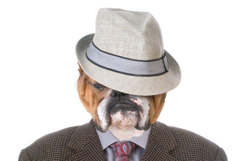 Buldog gekleed als een mens stock foto