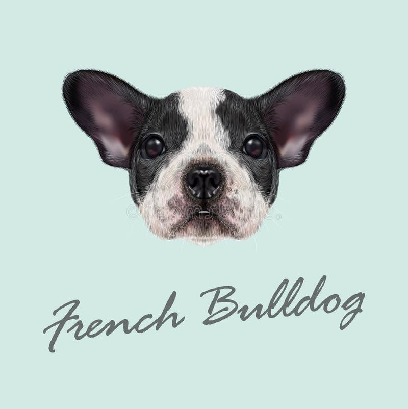 buldoga diagonalnego francuza kierownicza przyglądająca stara szczeniaka strona target1852_1_ sześć tydzień obraz royalty free