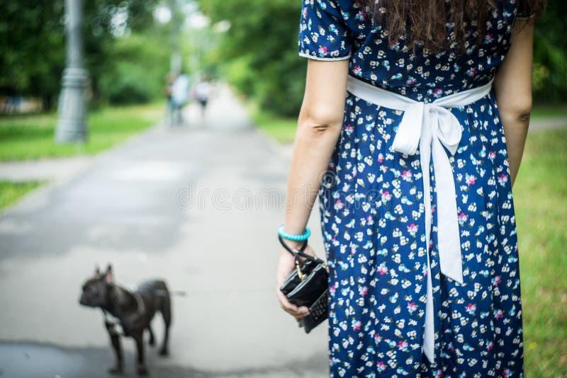 Buldogue francês em uma caminhada no parque com sua mãe futura fotos de stock