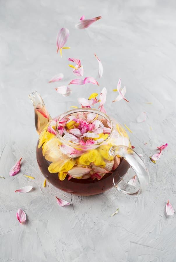 Bule de vidro com chá da flor do crisântemo da flor e pétalas de queda no fundo cinzento do cimento fotos de stock royalty free