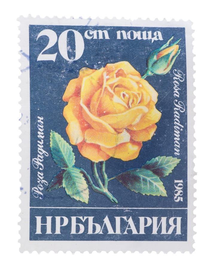 BULGÁRIA - CERCA DE 1985: um selo impresso em flores das mostras foto de stock