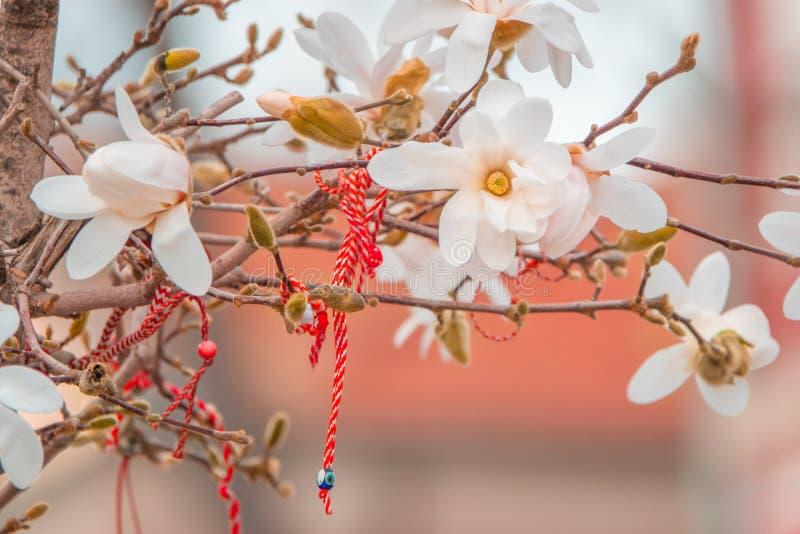 Bulgar Martenitsa på en blommande magnolia Nationellt bulgariskt och moldovan traditionellt vårferiesymbol fotografering för bildbyråer