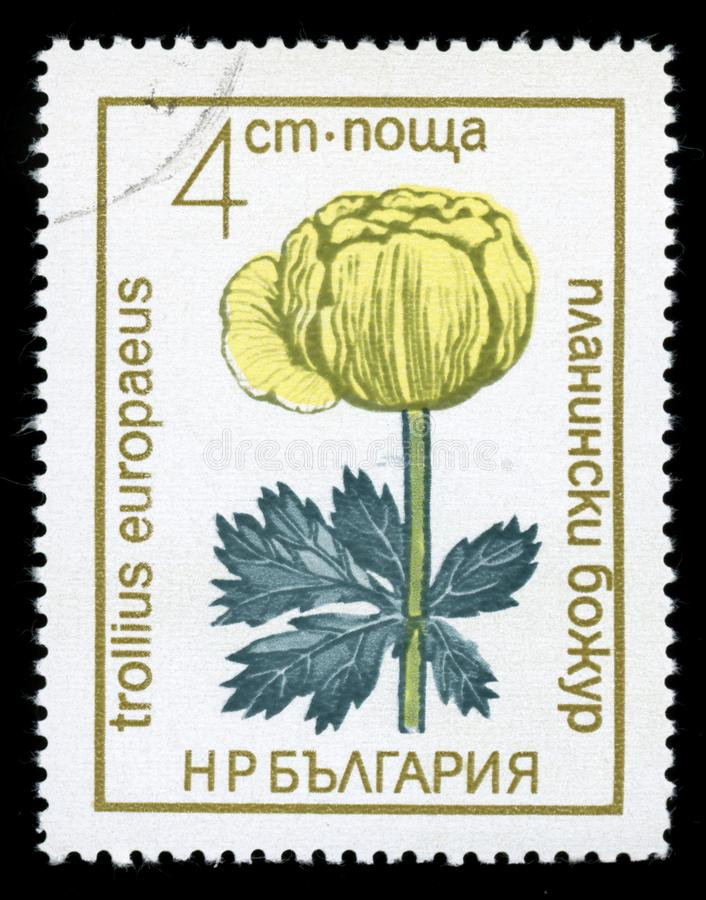 Bulgaria `Protected Flowers` series postage stamp, 1972 stock images