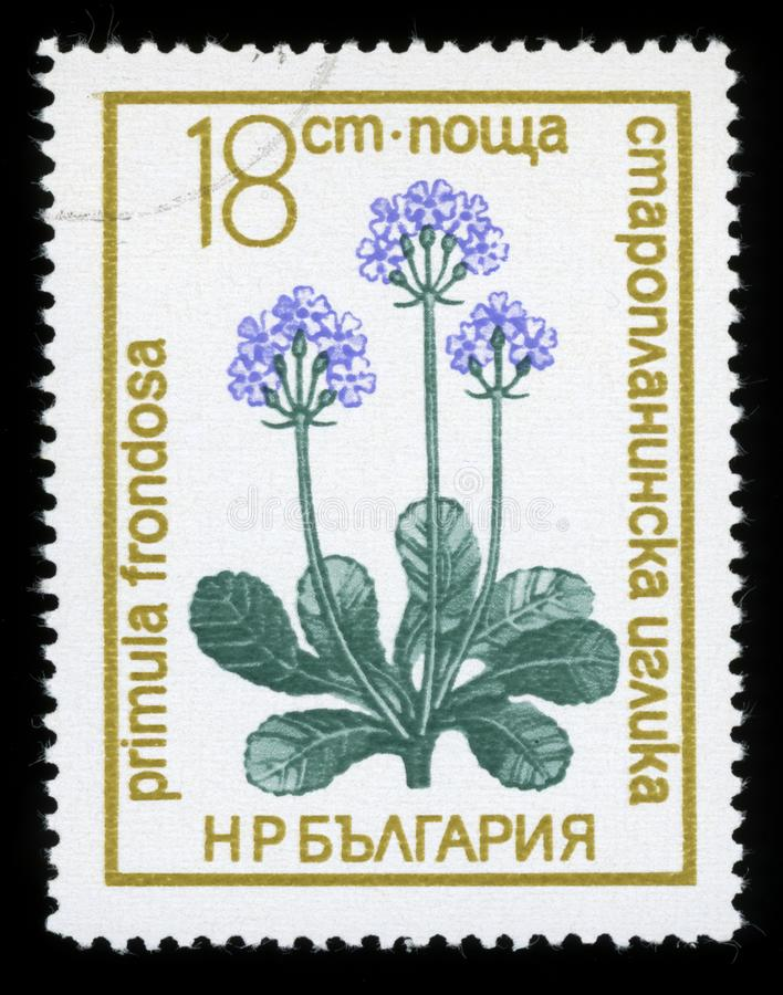 Bulgaria `Protected Flowers` series postage stamp, 1972 stock image