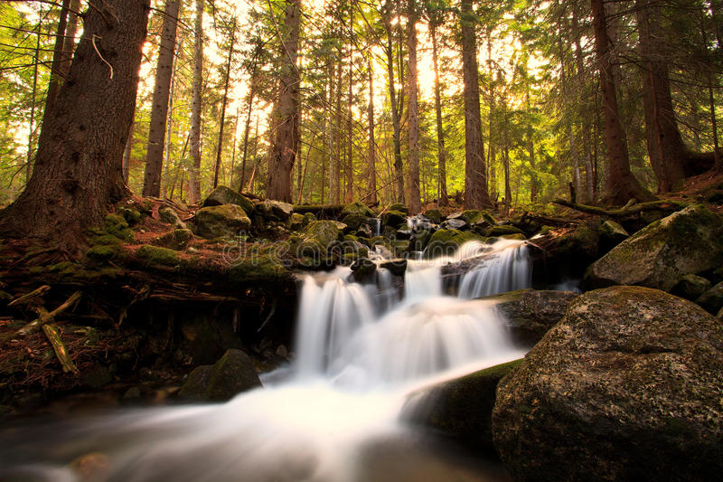 Download Bulgarian Wild Nature Forest Stock Photo - Image: 26070558