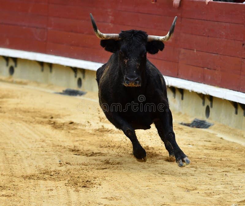 Bull с огнем в рожках в Испании стоковые изображения