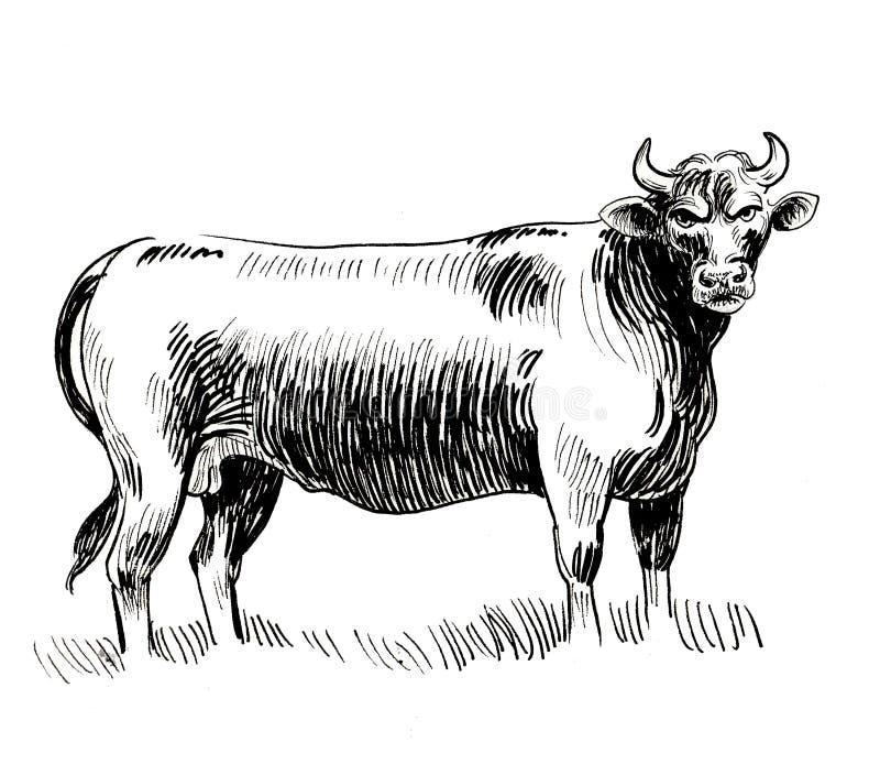 Bull arrabbiato illustrazione di stock