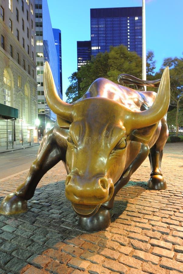 Bull cobrando fotos de stock royalty free