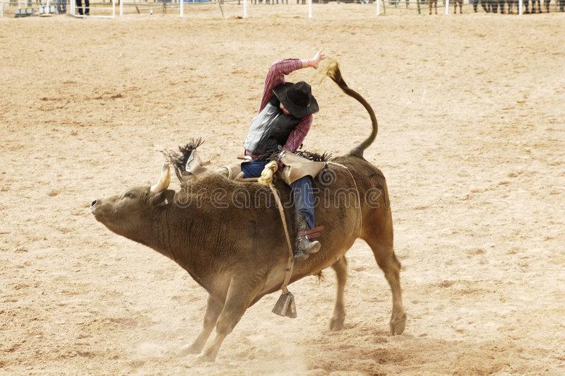 Bull conduisant l'action photo stock