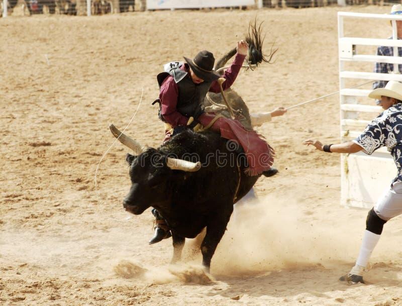 Bull, das 3 reitet stockbilder