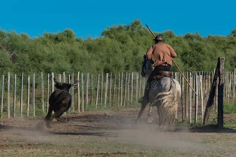 Bull e cavalo imagem de stock