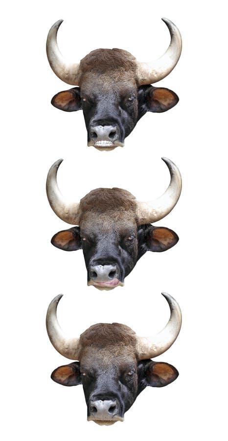 Download Bull Head. stock photo. Image of fantasy, strange, livestock - 20050276