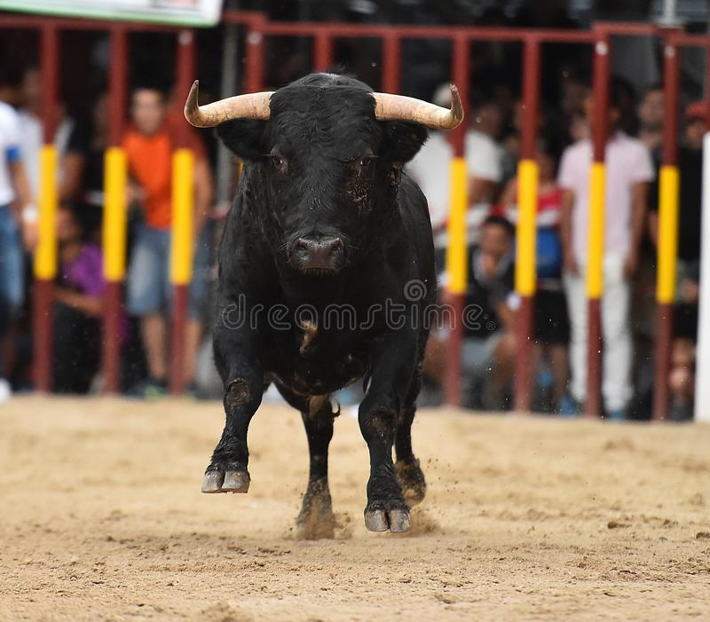 Bull que corre en buillring español fotos de archivo libres de regalías