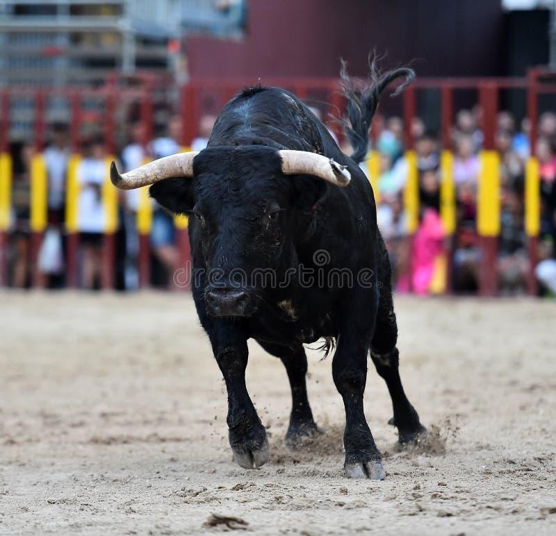 Bull que corre en buillring español fotografía de archivo
