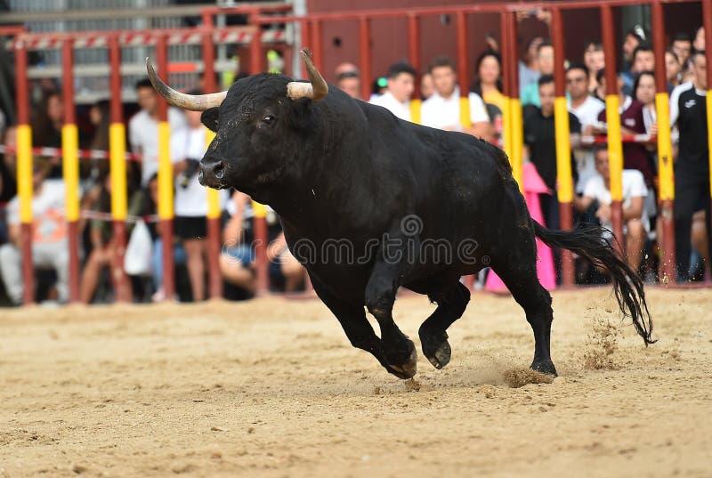 Bull que corre en buillring español imagenes de archivo