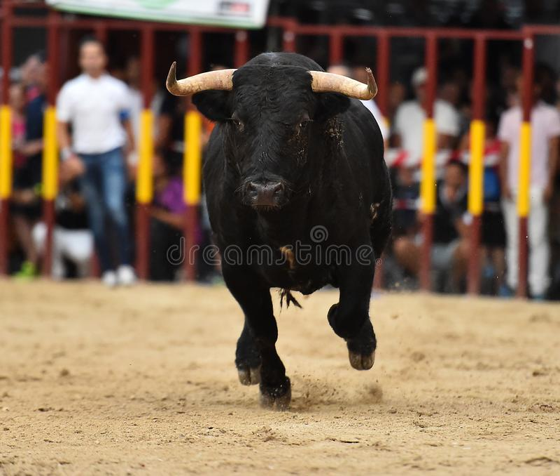 Bull que corre en buillring español fotos de archivo