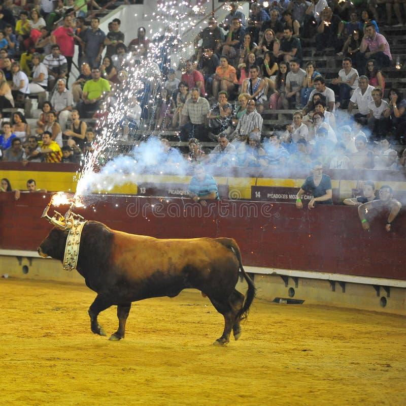 Bull que lucha española foto de archivo libre de regalías