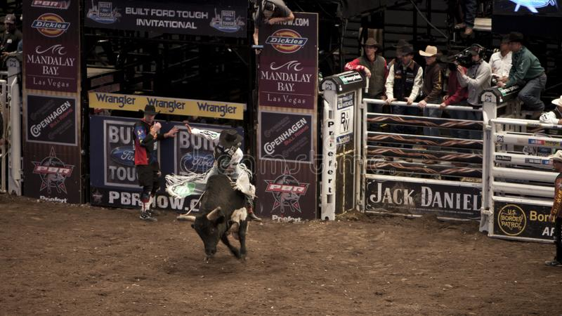Professional Bull Rider tournament on Madison Square Garden stock photography