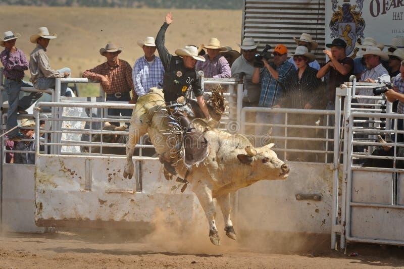 Bull Rider Gets Airborne imagens de stock