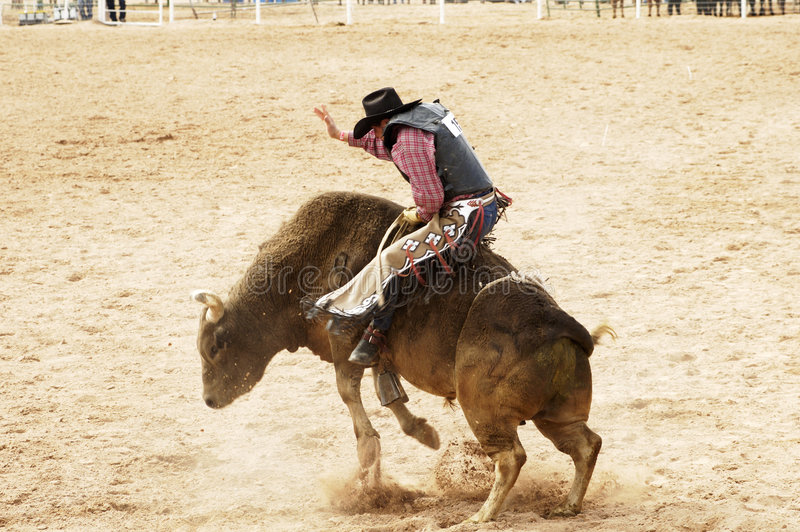 Bull Riding 1 royalty free stock images