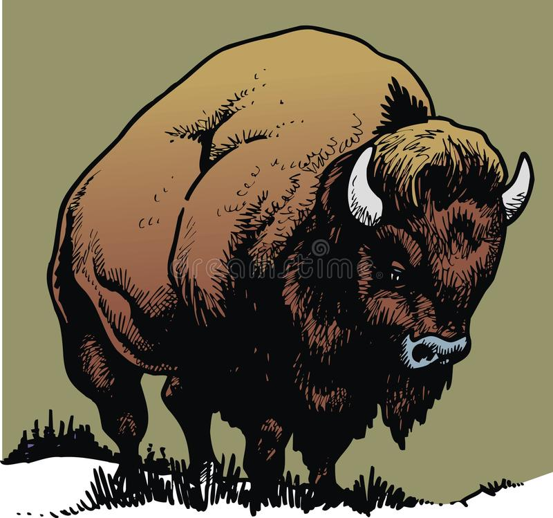 Bull salvaje ilustración del vector