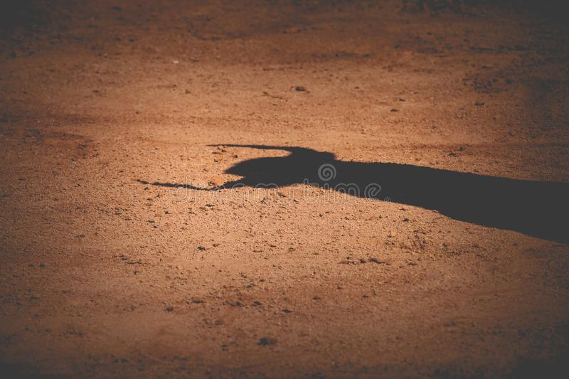 Bull shadow. On sand in a bullring royalty free stock photos