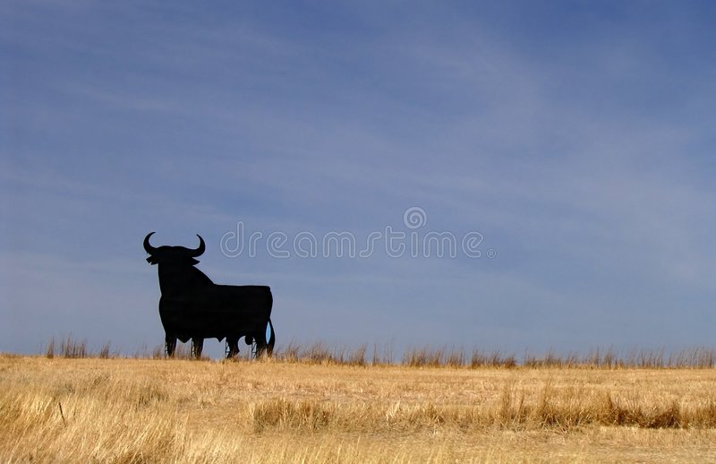 Bull Spain royalty free stock photography