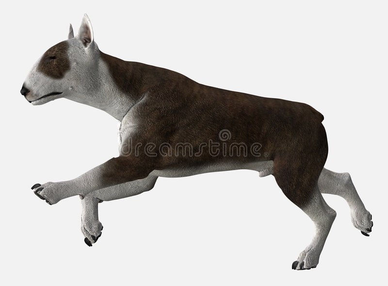 Download Bull Terrier - 06 stock illustration. Image of trot, attack - 1999059