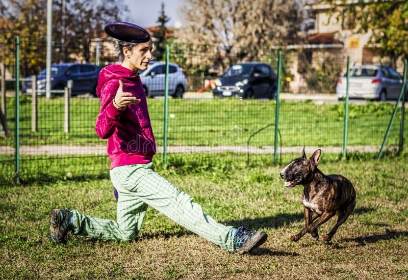 A Bull terrier salta durante a formação de cães-discos com treinador feminino imagem de stock