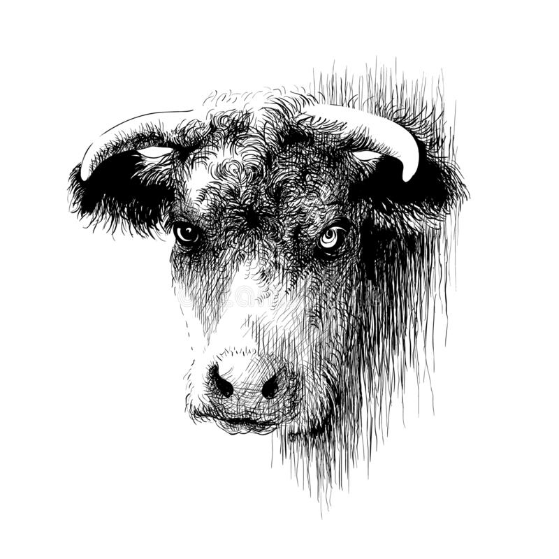 Bull, vaca, bisonte, retrato principal do b?falo Desenho da tinta de Digitas ilustração do vetor