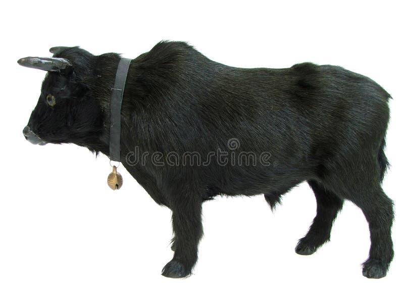bull01 arkivbild