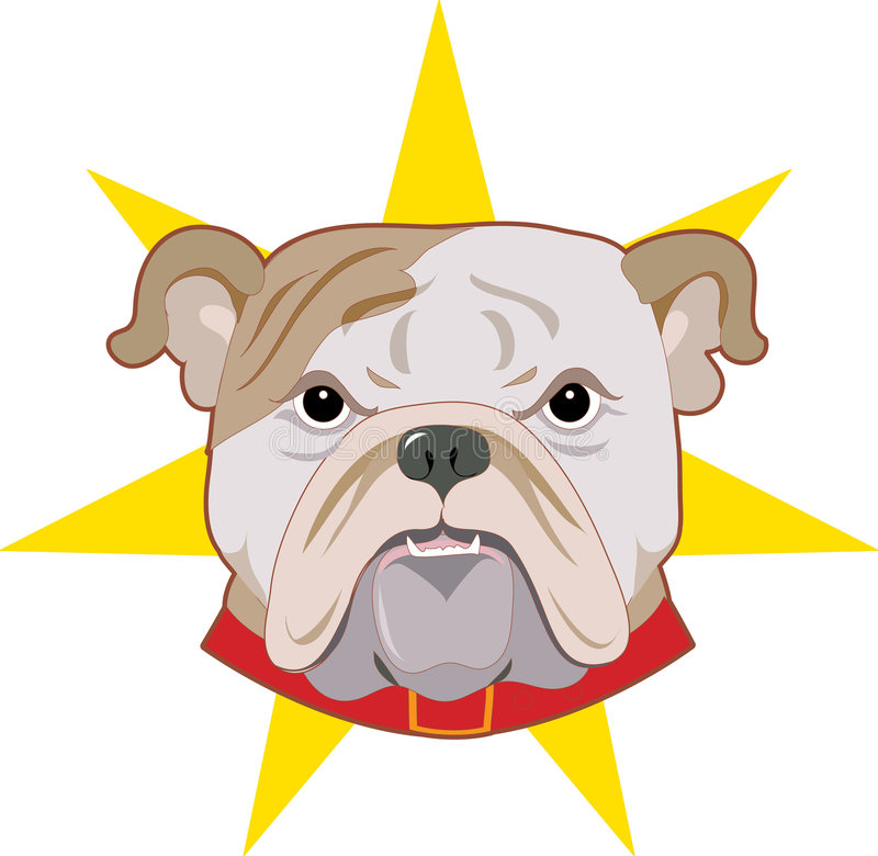Bulldog. Angry face of a bulldog vector illustration