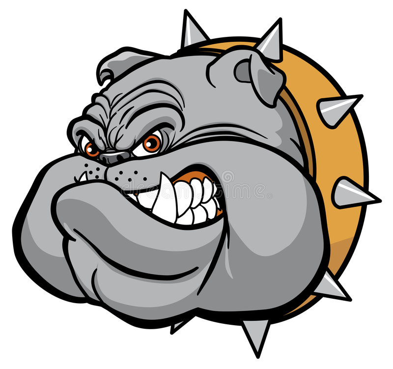 Bulldog. Vector illustration Closeup of furious bulldog