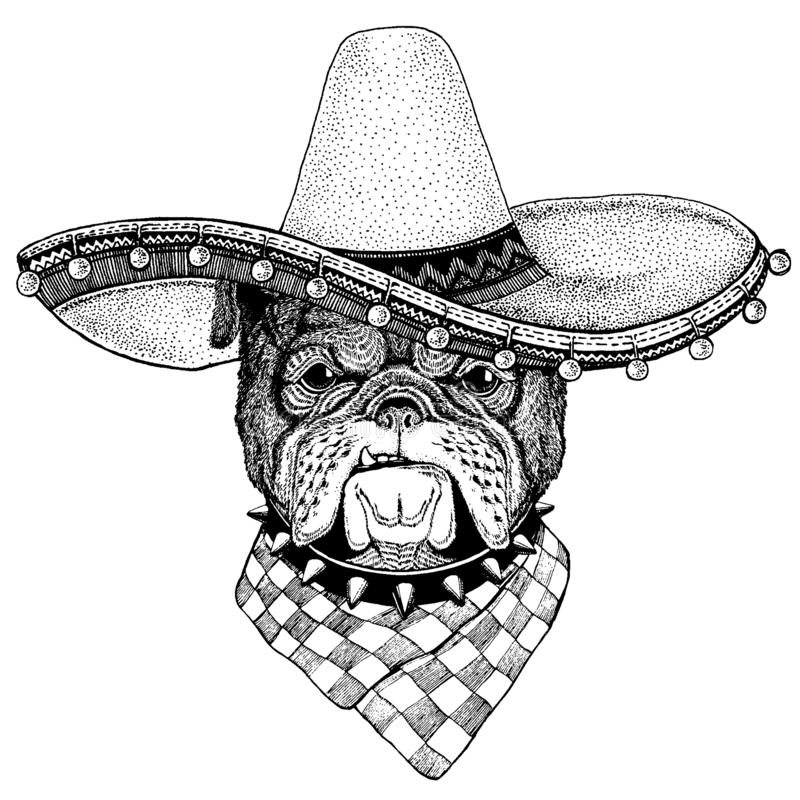 Bulldog, dog wearing traditional mexican hat. Classic headdress, fiesta, party. Bulldog, dog wearing traditional mexican hat. Classic headdress, fiesta party stock illustration